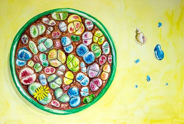 Mixed lithops bowl comission, art, painting
